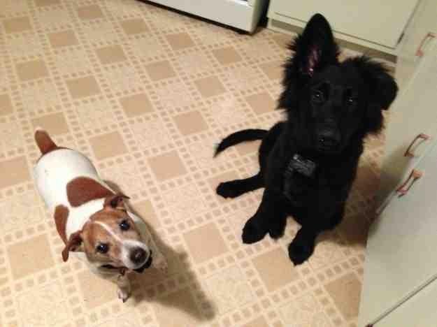 Hound, Bird-dog, JRT owners???  Help!-imageuploadedbypg-free1357947652.049915.jpg