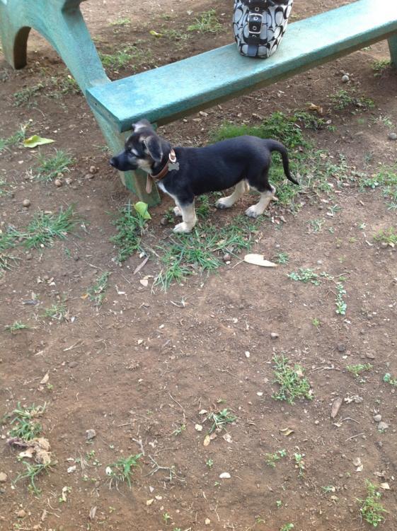 Malnourished puppy-imageuploadedbypg-free1358054850.955056.jpg