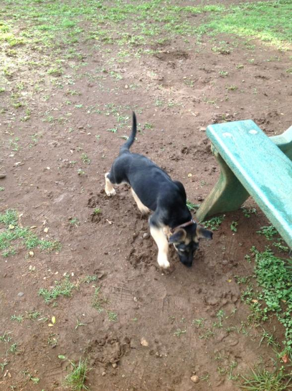 Malnourished puppy-imageuploadedbypg-free1358718233.176150.jpg