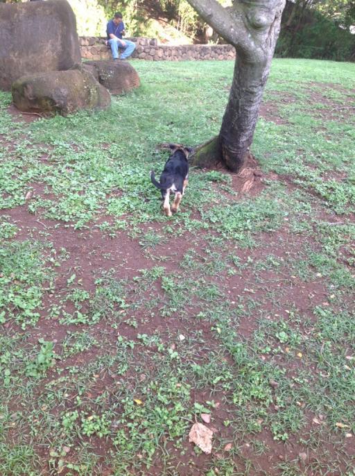 Malnourished puppy-imageuploadedbypg-free1358718245.519403.jpg