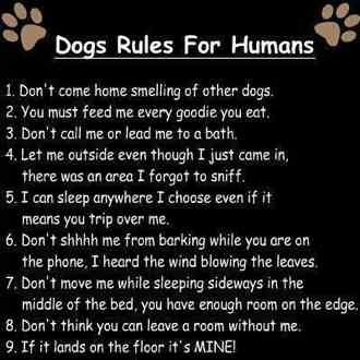 Dog Rules for Humans!-imageuploadedbypg-free1359076046.085384.jpg