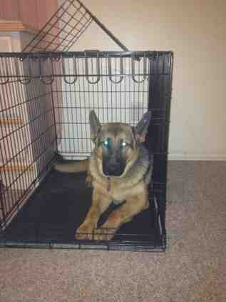 Does your dog love their crate?-imageuploadedbypg-free1360469022.436547.jpg