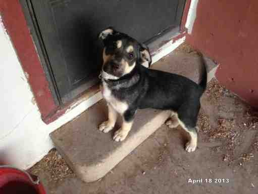 Puppy size-imageuploadedbypg-free1367339003.133107.jpg