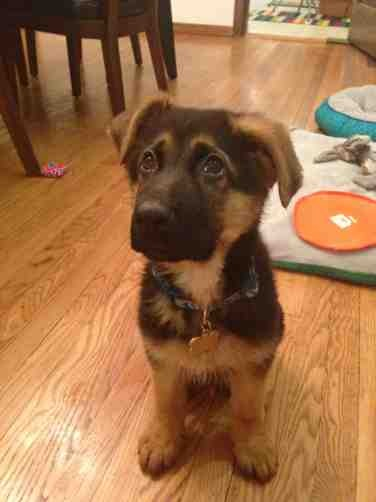 Help!  I over exercised my dog and he is underweight-imageuploadedbypg-free1369524276.284733.jpg