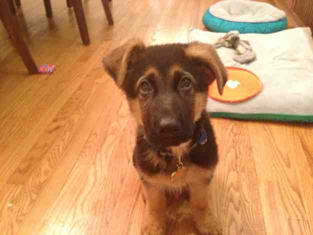 Help!  I over exercised my dog and he is underweight-imageuploadedbypg-free1369524324.618608.jpg