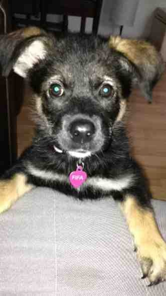 Puppy is getting very aggressive.-imageuploadedbypg-free1371963913.969166.jpg
