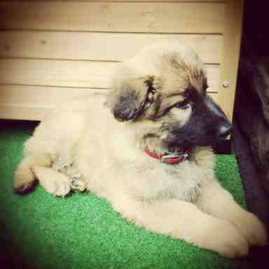 Puppy walks-imageuploadedbypg-free1377847713.239329.jpg
