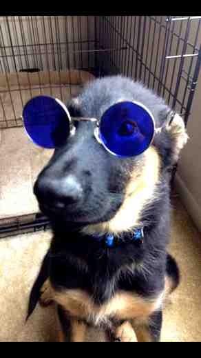 John lennons dog haha-imageuploadedbypg-free1386008265.389666.jpg