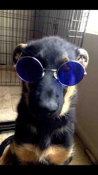 John lennons dog haha-imageuploadedbypg-free1386008273.479426.jpg