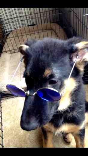 John lennons dog haha-imageuploadedbypg-free1386008279.402346.jpg