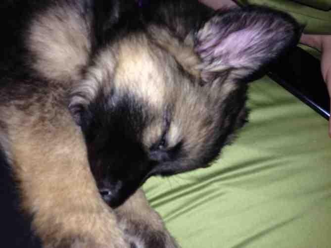New puppy :)-imageuploadedbypg-free1386079454.589968.jpg