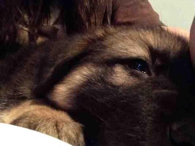 New puppy :)-imageuploadedbypg-free1386079467.552653.jpg