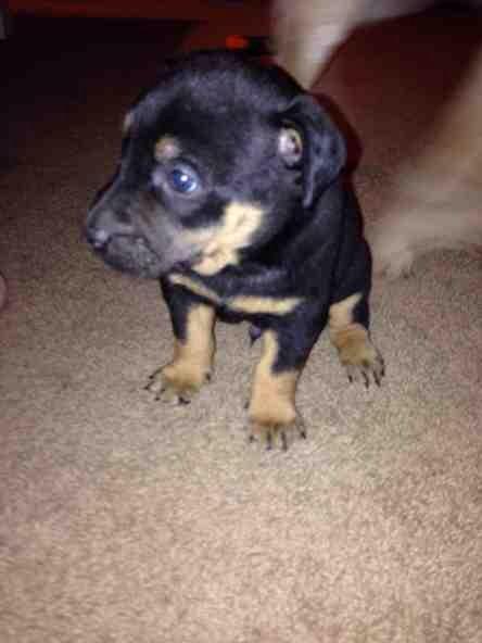 My puppy age.-imageuploadedbypg-free1386281278.989531.jpg