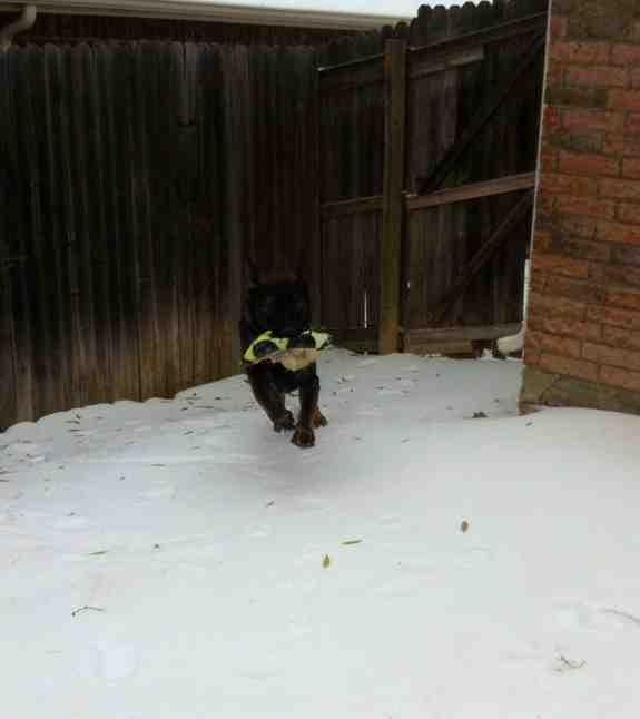 Snow day!-imageuploadedbypg-free1386741406.907423.jpg