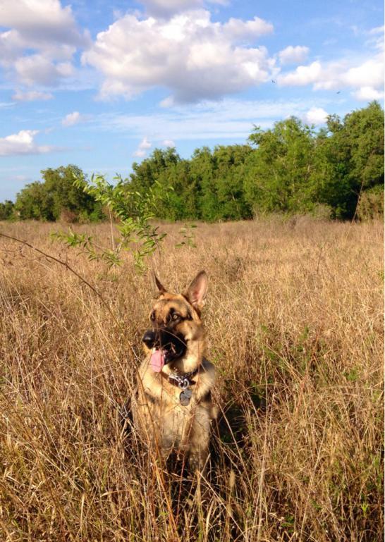 Florida Lion-imageuploadedbypg-free1386984910.739597.jpg