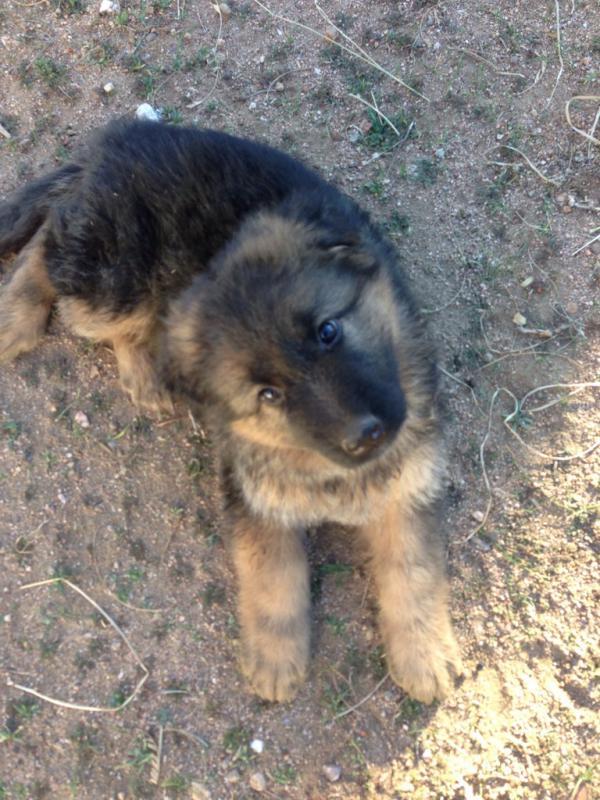 2013 Puppies!!!-imageuploadedbypg-free1387415361.623669.jpg