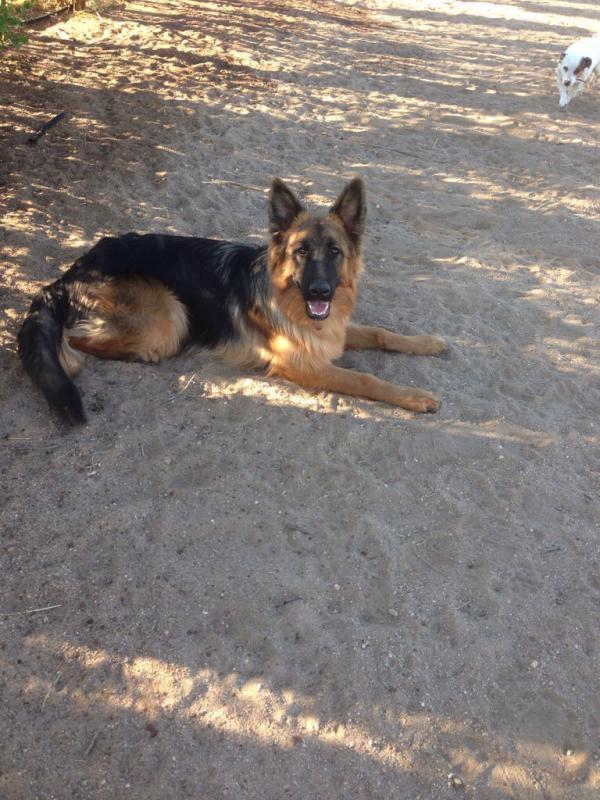 2013 Puppies!!!-imageuploadedbypg-free1387415644.385538.jpg