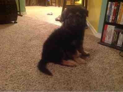 2013 Puppies!!!-imageuploadedbypg-free1387421384.476582.jpg