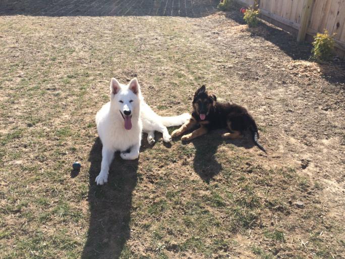 2013 Puppies!!!-imageuploadedbypg-free1387421576.087997.jpg