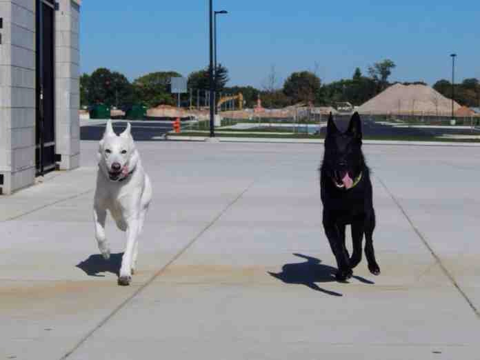 Maya & Dexter-imageuploadedbypg-free1387866444.520655.jpg