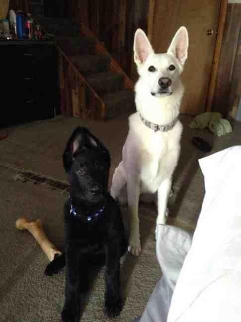 Maya & Dexter-imageuploadedbypg-free1387866569.086525.jpg