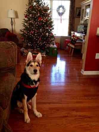 Christmas.-imageuploadedbypg-free1387906722.318228.jpg