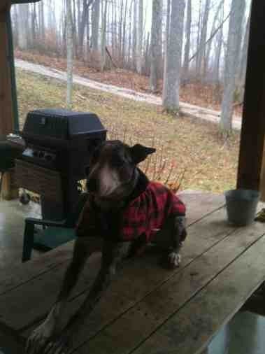 Outfitting Your GSD For Cold Weather Outdoors.-imageuploadedbypg-free1388350049.971248.jpg