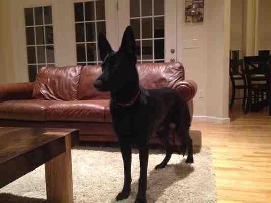 Not barking-imageuploadedbypg-free1388406996.641873.jpg