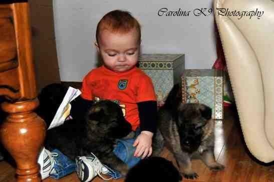 Puppies love babies-imageuploadedbypg-free1388687892.112038.jpg