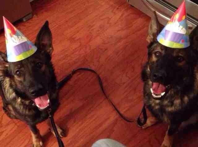 creative kids & dogs-imageuploadedbypg-free1389815840.919403.jpg