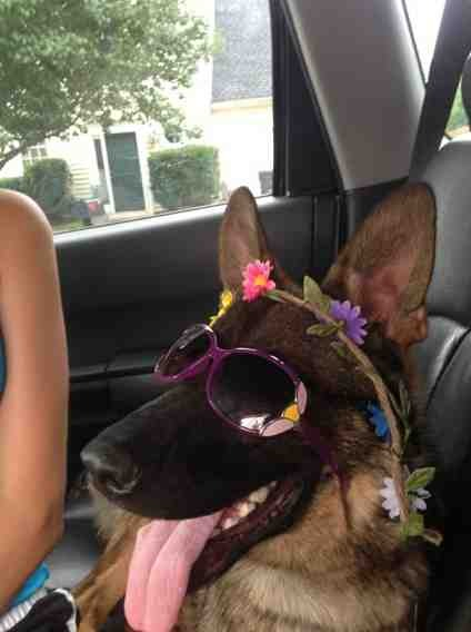 creative kids & dogs-imageuploadedbypg-free1389815905.851563.jpg