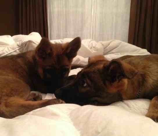 Puppy ears please!-imageuploadedbypg-free1389824497.675151.jpg