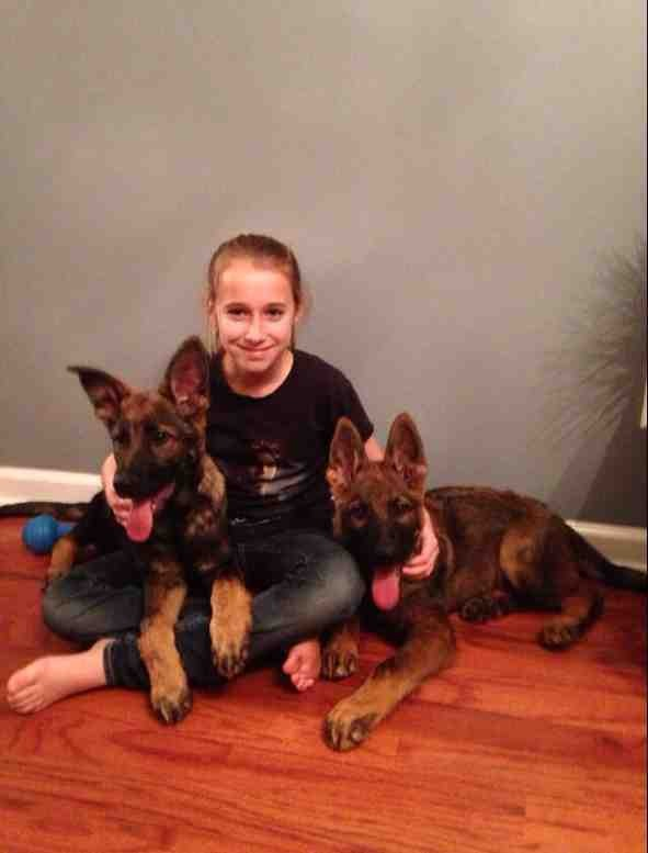 Puppy ears please!-imageuploadedbypg-free1389824522.408206.jpg