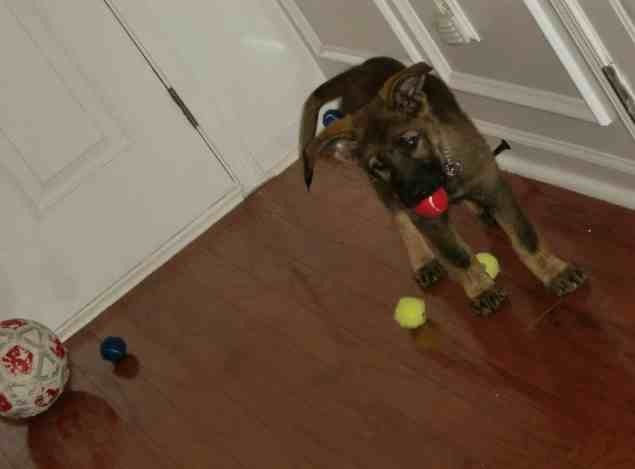 Puppy ears please!-imageuploadedbypg-free1389824543.324044.jpg