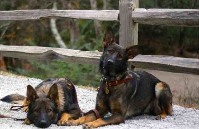 Puppy ears please!-imageuploadedbypg-free1389824592.874167.jpg