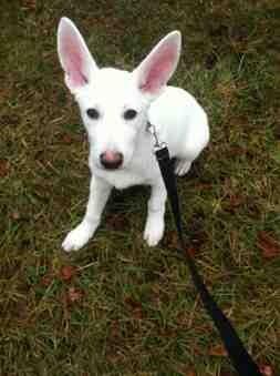 Pet insurance-imageuploadedbypg-free1390222842.231138.jpg