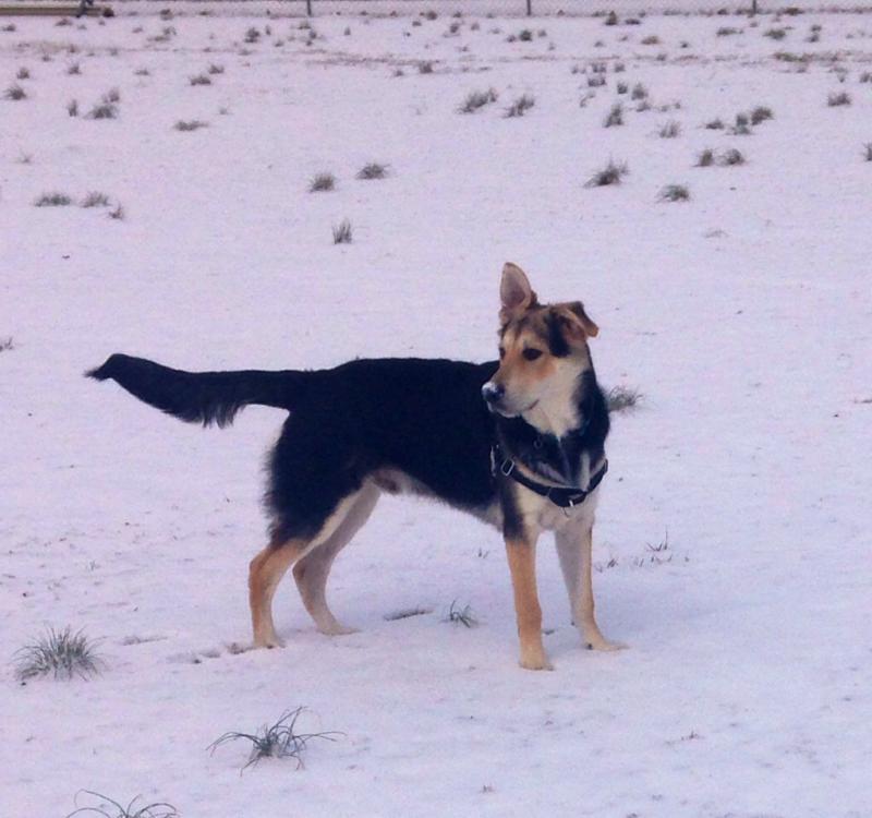 Nuks first snow!-imageuploadedbypg-free1391021877.949372.jpg