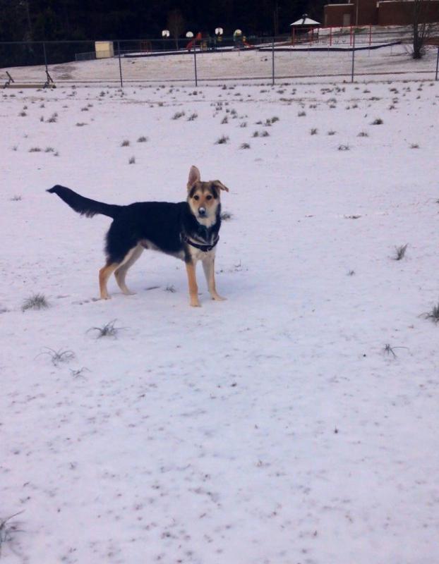 Nuks first snow!-imageuploadedbypg-free1391021929.128035.jpg