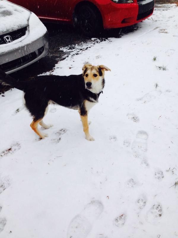 Nuks first snow!-imageuploadedbypg-free1391021941.061861.jpg