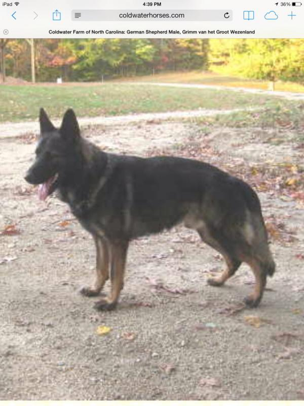 Choosing a breeder-imageuploadedbypg-free1391982325.926377.jpg