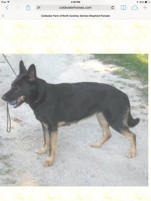 Choosing a breeder-imageuploadedbypg-free1391982363.409478.jpg