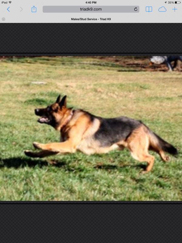 Choosing a breeder-imageuploadedbypg-free1391982381.950668.jpg
