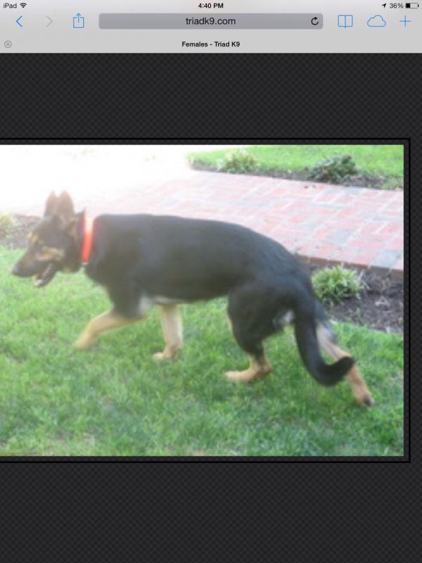 Choosing a breeder-imageuploadedbypg-free1391982403.910928.jpg