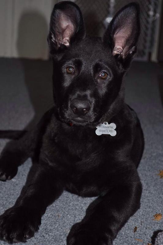 Alvin at 12 weeks!-imageuploadedbypg-free1391987383.026016.jpg