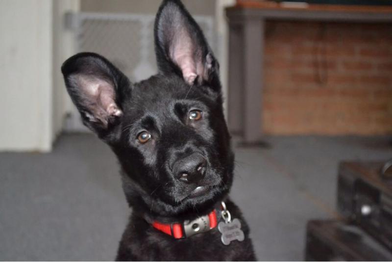Alvin at 12 weeks!-imageuploadedbypg-free1391987393.516907.jpg