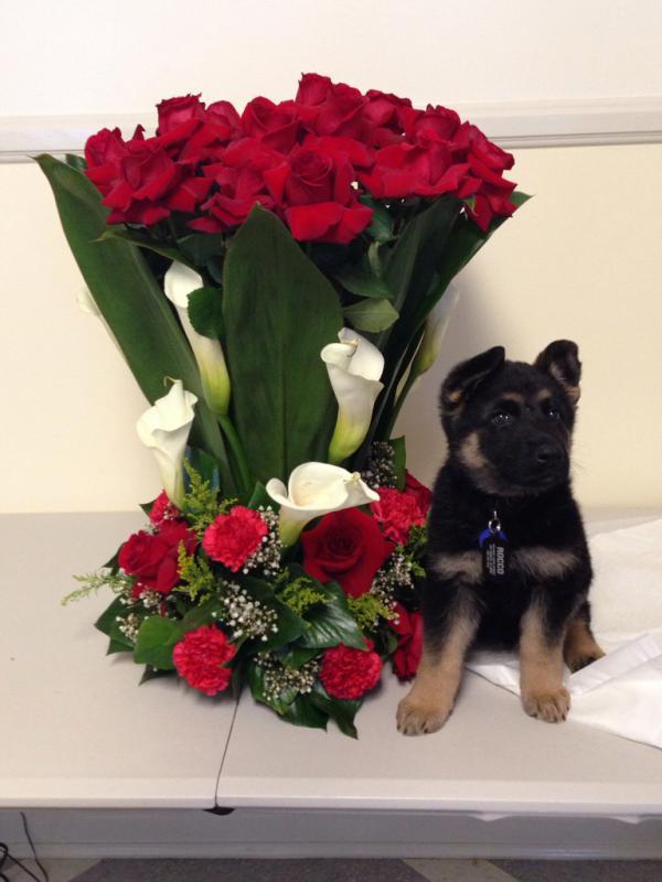 Valentine's Day Gift :)-imageuploadedbypg-free1392493618.906639.jpg