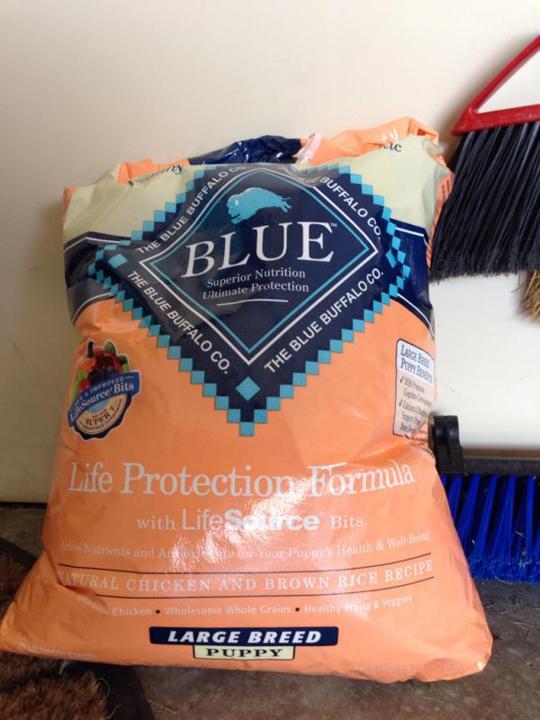 Blue buffalo-imageuploadedbypg-free1394041383.472990.jpg
