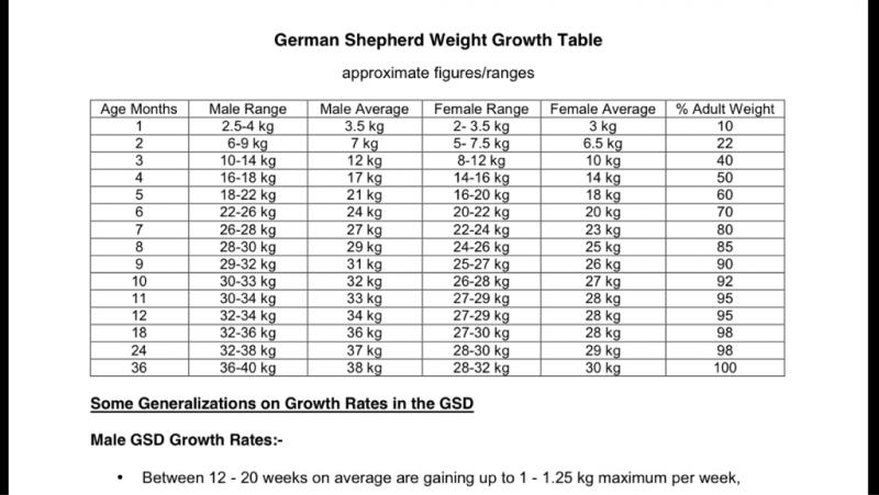 German Shepherd Growth Chart Male Best Picture Of Chart