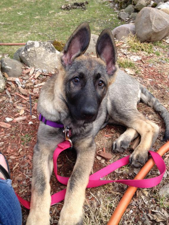 Puppy weight-imageuploadedbypg-free1397667811.271140.jpg