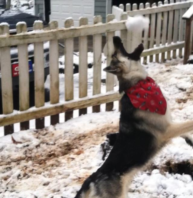 Snowball fetch!-imageuploadedbypg-free1398042546.076836.jpg